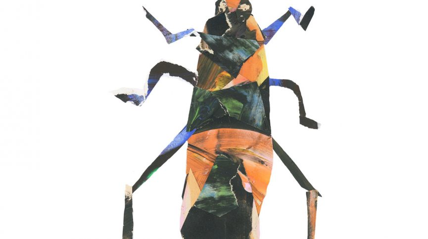 Milkweed Beetle